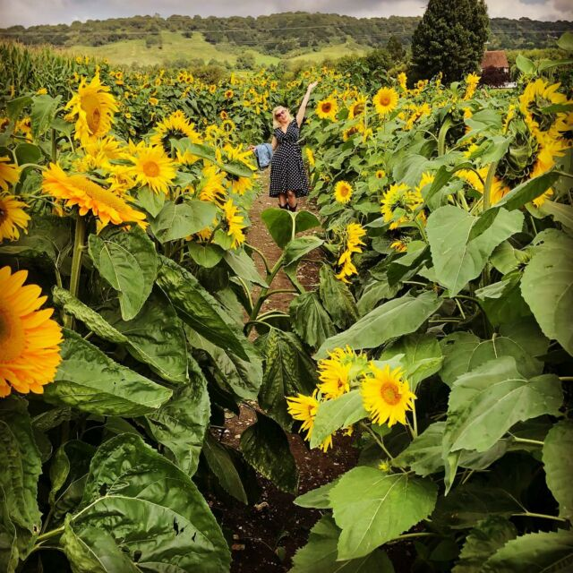 Showgirl in sunflowers 🌻 . . A rare off duty showgirl snap just being me and having fun @mazemoonuk  . . Was a glorious few days with friends visiting my heart is full 🥰  . . #showgirls #sunflower #sunflowers🌻 #kentlife #kentcountryside #mazemoon #sunshineday #dayoffwork #befree #wildlife #friends #kentdaysout #blondehair #fancyfree